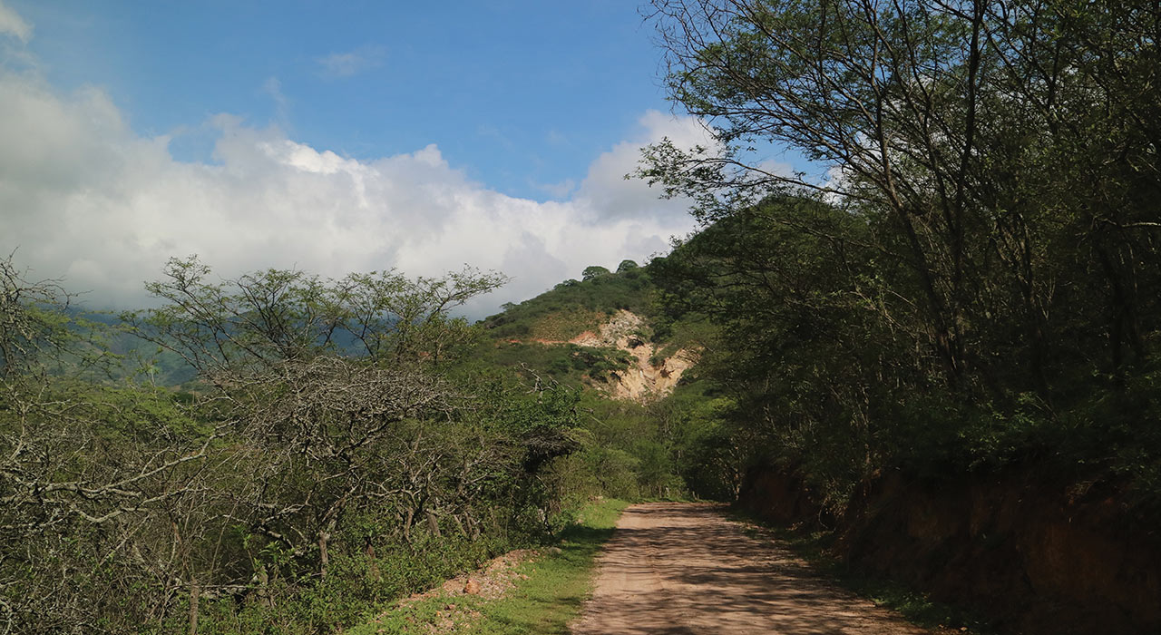 Signs are good for Sunstone's elephant hunt in Ecuador, says analyst